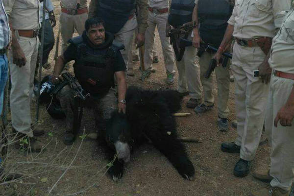 The Forest Deparment Worker Killed The Bear Bullet