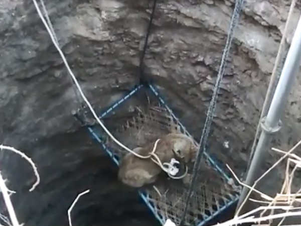 Live Rescue: ખાટલા પર બેસાડ્યું તેમ છતાં ચીડાયું સિંહબાળ!