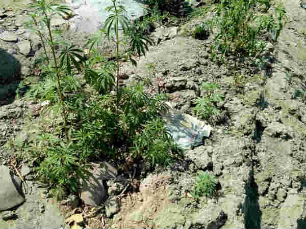 Unjha Temple Backyard Used Opium Farming