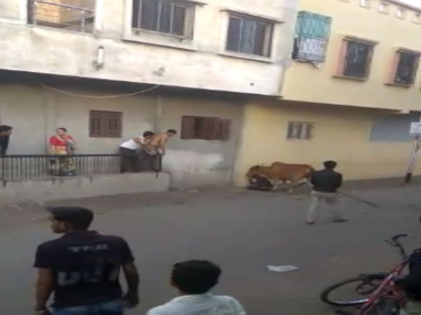 Surat Cow Attacked On Young Man At Surat