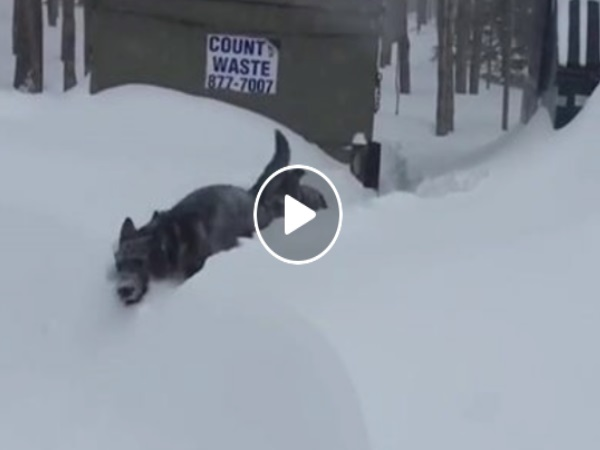 When German Shepherd Sees Its Friend Trapped The Snow