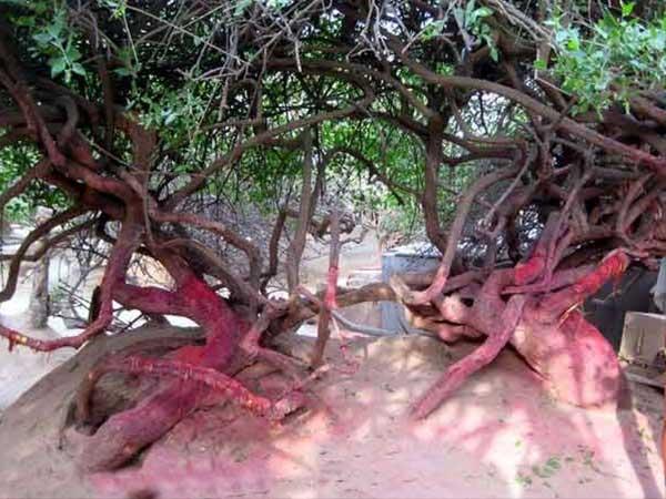 Bizarre The Mysterious Nidhivan Temple