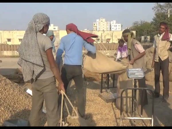 Farmers Rejoiced After Government Purchase The Groundnut At Support Prices