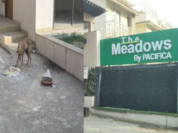 Ahmedabad Housing Society Went To Police Station After Facing Dog Menace Issue