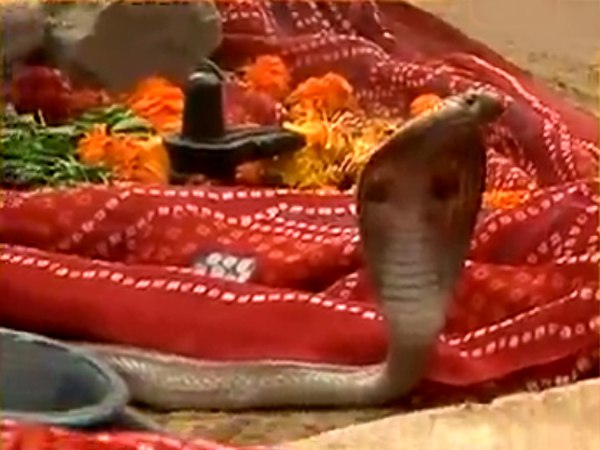 People Starts Worshipping Roadside Snake Near Delhi Haryana Border