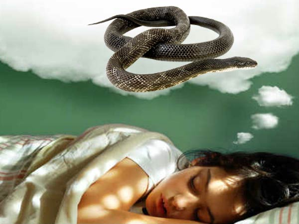 What Does It Mean When You Dream About Snakes