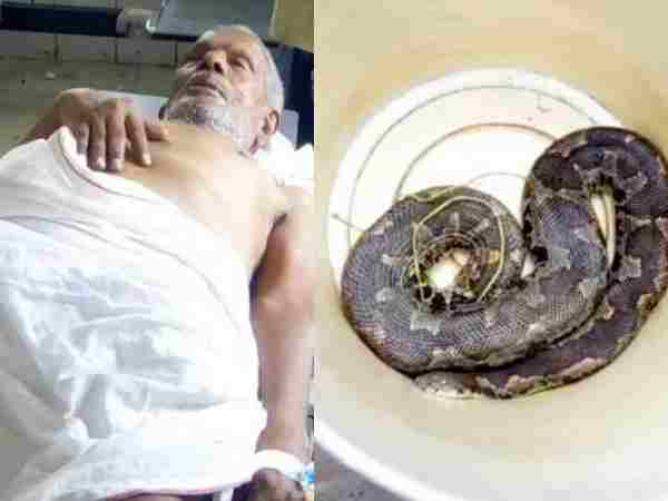 A Man Injured Due Snake Bite In Bihar