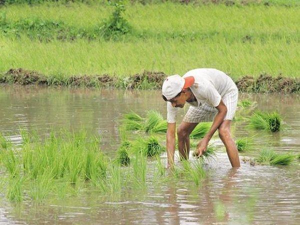 Modi Cabinet Decision Kharif Crop Msp Hike Farmers