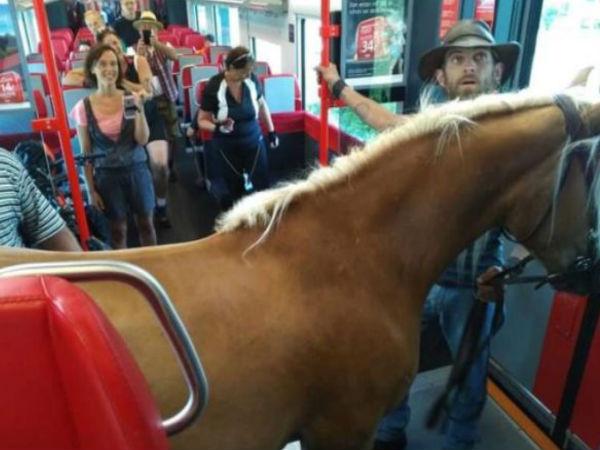 Austrian Man Tries To Take His Horse On The Train