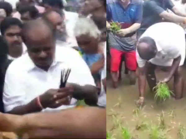 Karnataka Cm Hd Kumaraswamy Transplants Paddy Seedlings In Mandya District