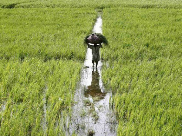 Government Provide 2 Lac If Farmer Death Accidental Cause
