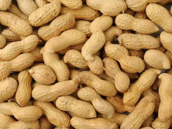 Government Starts Online Registration Groundnuts Msp