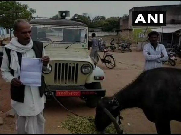 Officer Demanded Bribe Farmer Tied The Buffalo To The Officer S Car