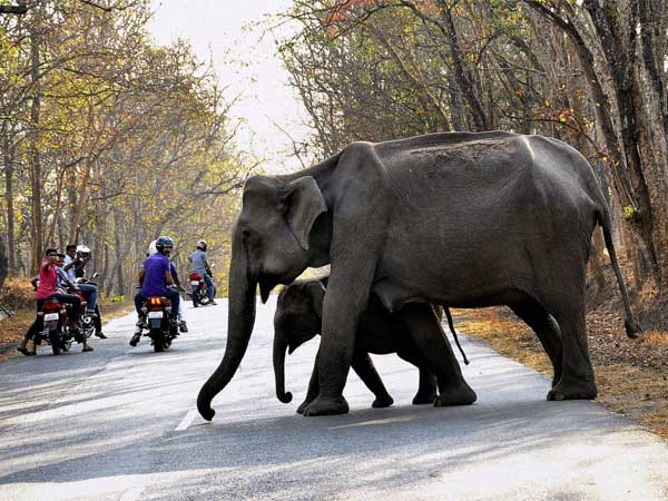 Year Old Fell Foot Elephants Saved An Elephant
