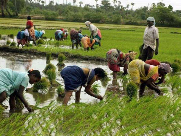Pm Kisan Yojana 12 Crore Farmers Get First Installment