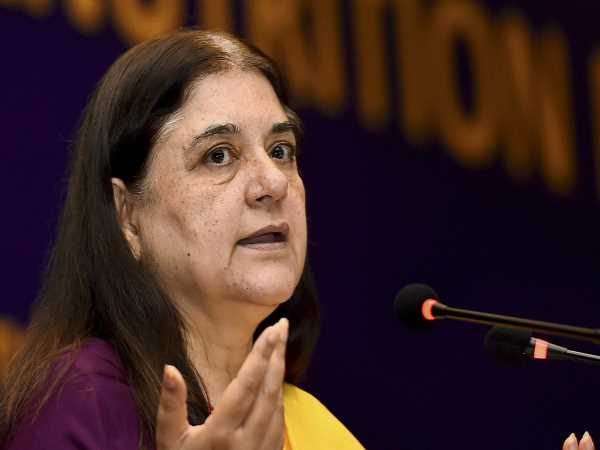 Maneka Gandhi On Minimum Income Scheme By Congress Rahul Gandhi Says Don T Answer To Sheikhchillis