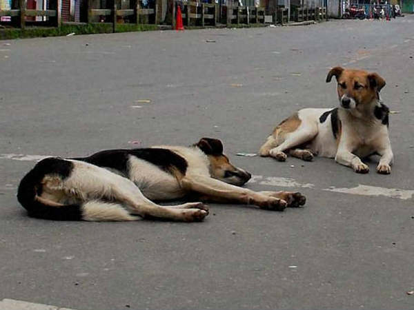 Mumbai Woman Have To Pay 3 60 Lakh For Feeding Stray Dogs