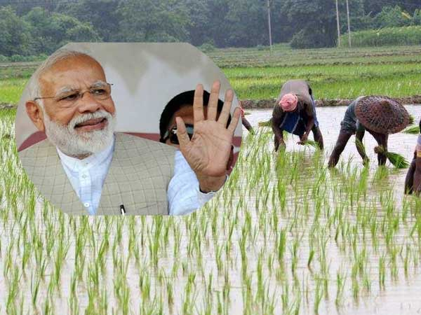 Second Installment Reached In The Accounts Of Farmers