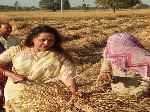 Hema Malini Shares Photos Of Helping Womens To Cut Wheat Crop