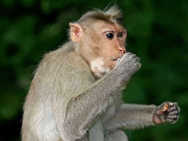 Chinese Scientist Placed Human Brain Genes In Monkey Saw These Changes