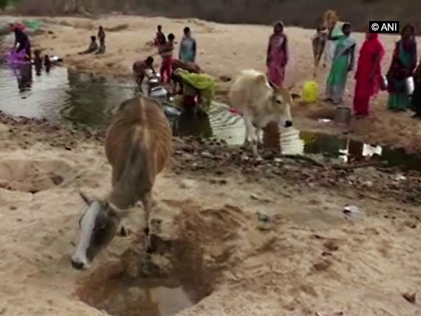 Chhattisgarh Village Facing Severe Water Shortage Locals And Animals Use Same Pond
