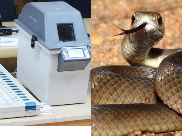 Snake inside VVPAT machine