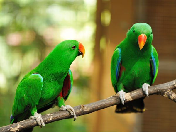 Benefits Of Keeping Parrots As Pets