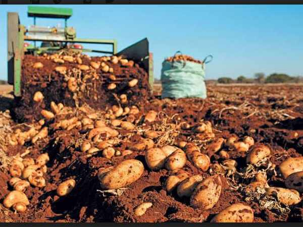 Pepsico Sued 4 Gujarati Farmers For Growing Potato