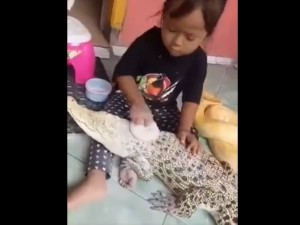 This 3 Year Old Girl Has Guts To Make A Python Brush Its Tee
