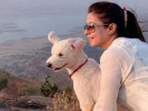 Urmila Matondkar Stars In Radar Taunt At Pm Modi With Pet Romeo