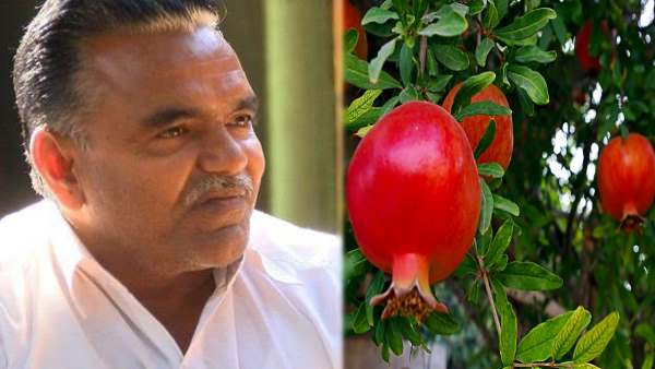 Divyang Farmer In Gujarat Earning 90 Lakh From Pomegranate Farming