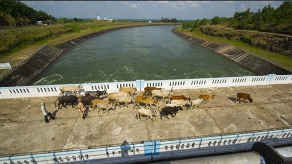 Narmada Project Total Expense Gujarat Government Revealed In Assembly