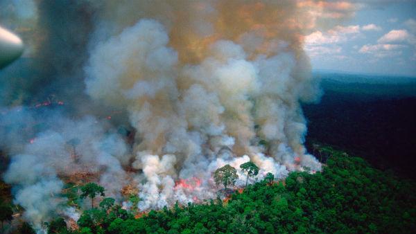 <strong>ત્રણ અઠવાડિયાથી સળગી રહ્યું છે એમેઝોનનું જંગલ, કેટલાય પ્રાણીઓનાં મોત</strong>