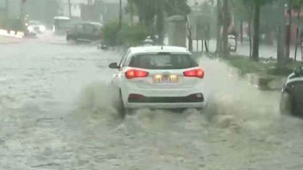 Vadodara Rain A Crocodile Appeared On The Vadodara Road