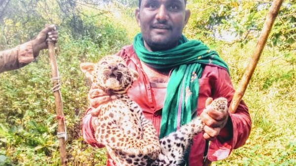 Viral Video Of Leopard Cub Being Harassed In Gir Gujarat