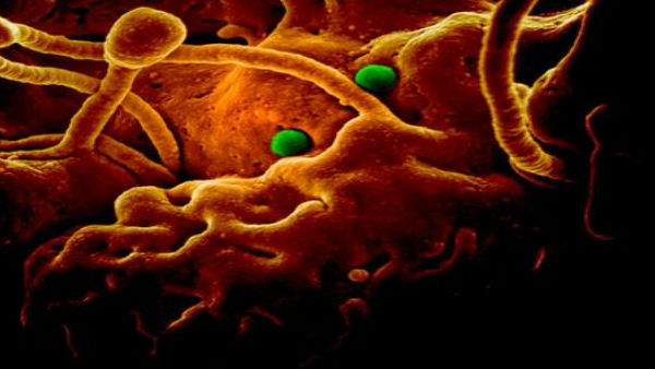 CoronaVirusને લઈ દેશભરના એરપોર્ટ પર હાઈ અલર્ટ, ચીનથી આવતા યાત્રીઓ પર ખાસ નજર