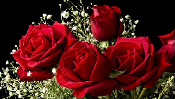 આ પણ વાંચોઃ Rose Day 2020: આજે રોઝ ડે, જાણો ગુલાબનો દરેક રંગ શું કહે છે?