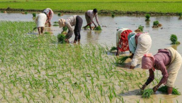 3 કરોડ ખેડૂતો માટે નાણામંત્રીનુ મોટુ એલાન, 31 મે સુધી વ્યાજમાં મળી છૂટ