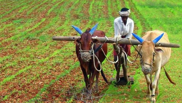 Good News For Farmers Record Growth In Agricultural Exports