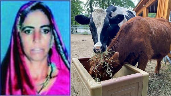 દૂધ વેચીને ગુજરાતની આ મહિલા કમાઈ રહી છે વર્ષના 1 કરોડથી વધુ