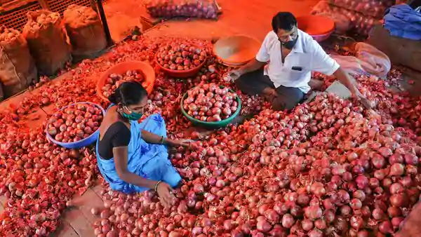 Government S Tough Decision On The Price Of Onions Relaxation On Import Rules