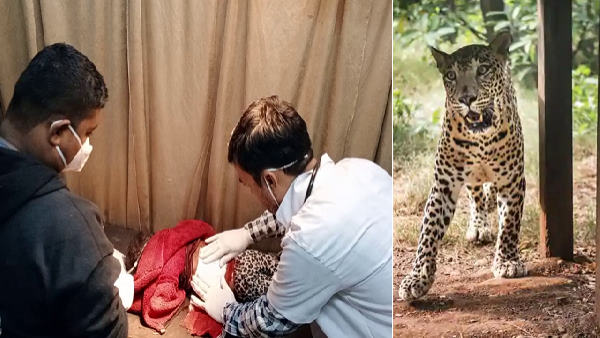 leopard attacked on child