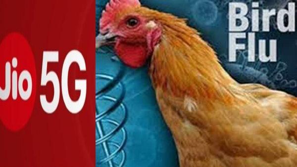 Fact Check: Jioની 5G ટેસ્ટિંગને કારણે પક્ષીઓ મરી રહ્યા છે? જાણો હકીકત