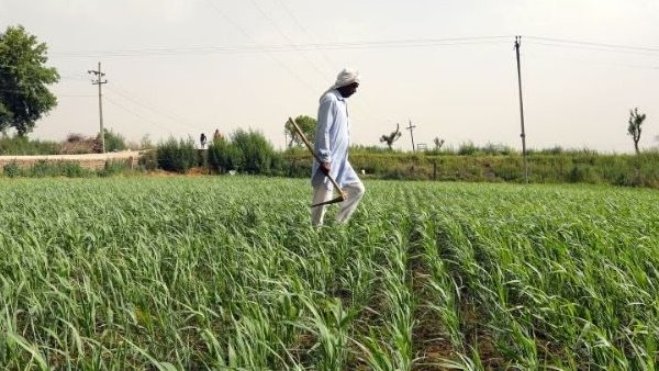 Union Budget 2021: શું બજેટમાં ખેડૂતોને મળશે ભેટ, સમ્માન નિધિની રકમ વધીને થશે 9000 રૂપિયા?
