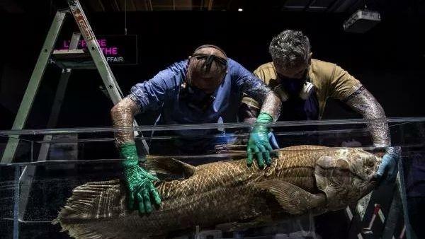ડાયનાસોર કાળની 42 કરોડ વર્ષ જૂની માછલી મળી, 4 પગ વાળી માછલી જોઈ વૈજ્ઞાનિકો પણ ચકિત