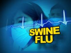 Swine Flue One More Deaths Rajkot Total 12 Dead