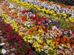 Amc Is Planning To Hold Mega Flower Show At Riverfront