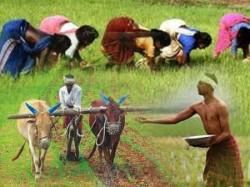 Crore For Crop Diversification In Union Budget