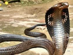 Naglok A Place Of Kobra In Chhattisgarh