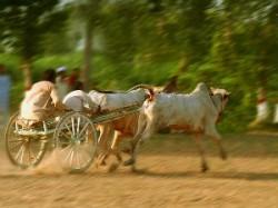 Rural Olympic Started In Festival Dang Darbar